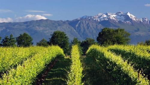 farecantine produttori vino